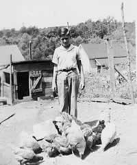 Harold, a teenager, feeding a small flock in a chicken lot.