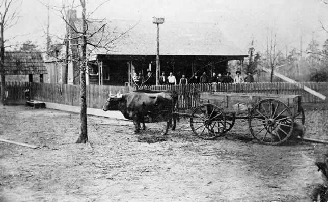 A team of oxen hitched to a wagon, standing behind a rude farmhouse. The family of about 10 are line up along the porch.