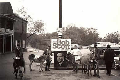 Photo: 4 donkeys and their handlers and a campaign sign reading 'Elect Bob Scott Governor'.