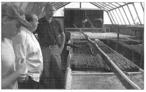 Men in greenhouse with raised counters holding thousands of seedling pods.