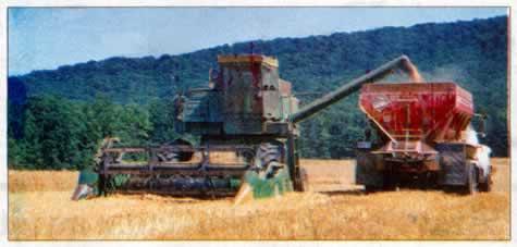 Combine harvesting grain in foothills of county