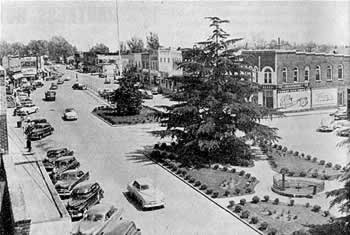 Wide street with median containing large fir trees