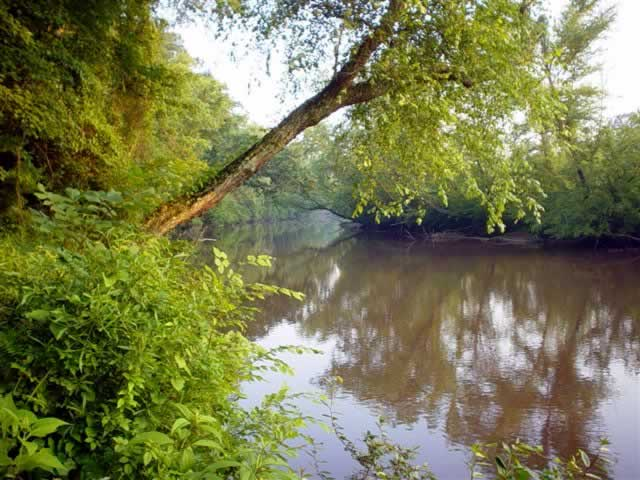 The bright green foliage of trees and undergrowth on the banks crowd the brown, still waters of the river.
