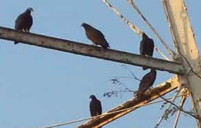 Blowup of five birds on girder.