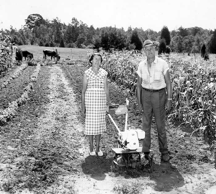 Fred and Nora Greene pose with their garden tiller at the near end of a freshly-tilled row. Two cows are grazing near the pasture fence just beyond the other end of the garden.
