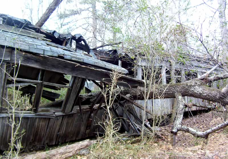 An extremely old passenger rail car sitting in the woods. It has been crushed by a falling tree.